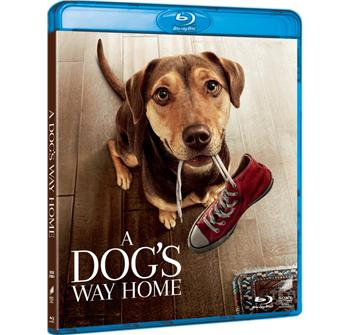 A Dog's Way Home billede