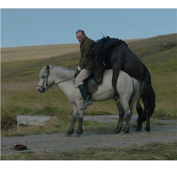 citater om heste slikke fisse video